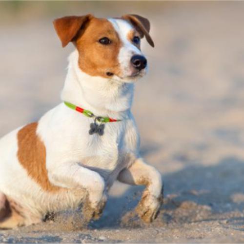Cuidados com seu pet na praia